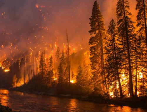 How Wildfires Are Polluting Rivers and Threatening Water Supplies