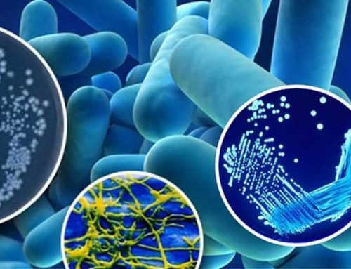 Management of Legionella in Water Systems (2019)