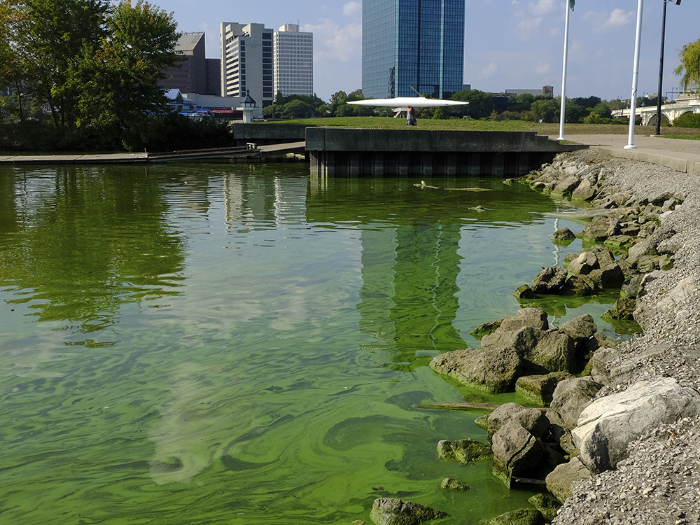 River-Algae